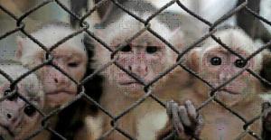 ctp-monkeys