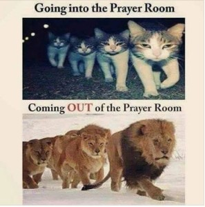 prayer - kitten or lion